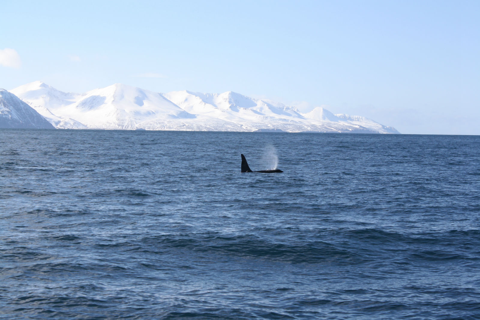 Whale Watching on the Edge of the Arctic