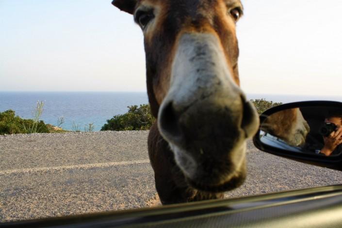 The Wild Donkeys Of The Karpaz Peninsula