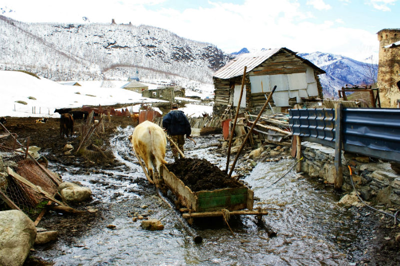 The locals went their way fearlessly, traversing snow, ice and mud as if it wasn't even there, some dragging huge sleds through the slush, laden high with mud or cow dung, to whatever business they had to attend to that day.