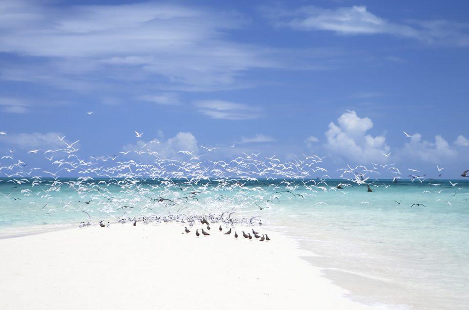 Fitzroy Island Travel Australia