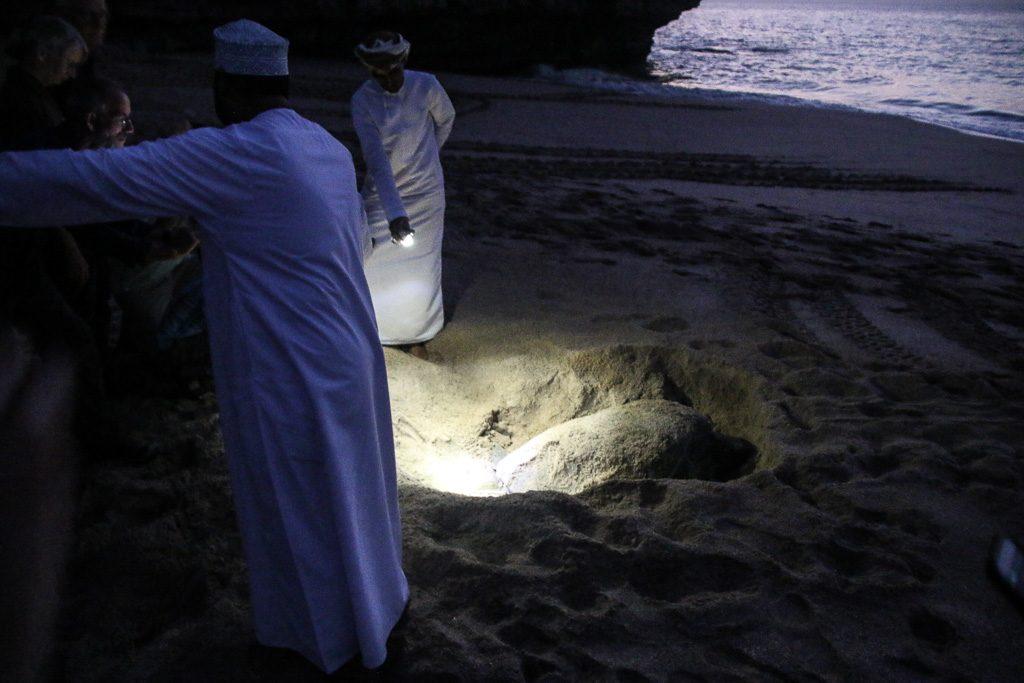 Ras Al Jinz Turtle Reserve Oman